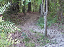 A trail at Laurel River Lake